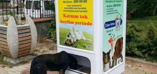 Feed stray dogs by recycling?! Now there's a win-win!