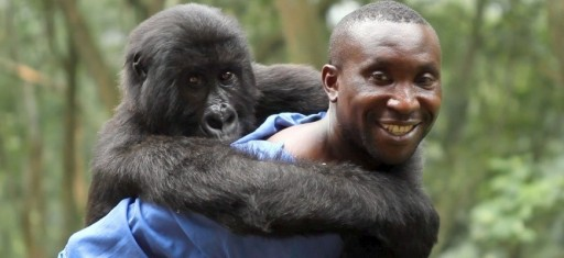 Andre Bauma with an orphaned gorilla.