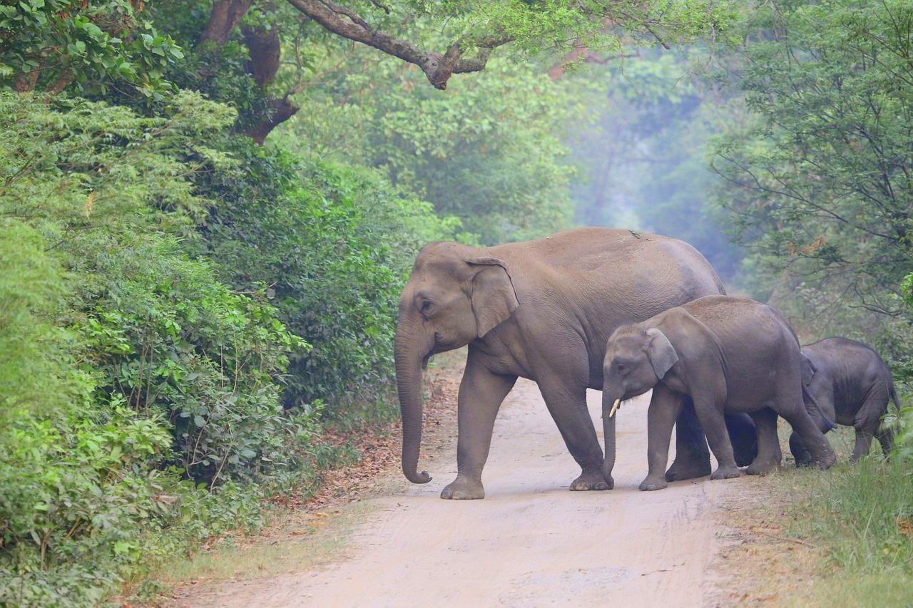 15 Amazing Facts You Probably Didnt Know About Elephants Smart N