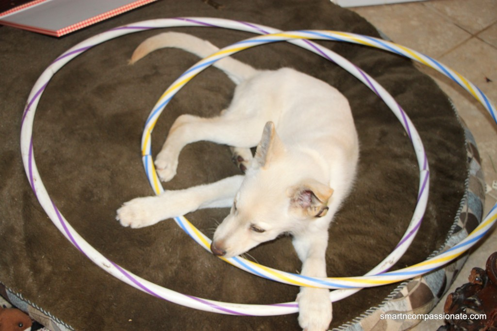 He loves hula hoops and wants to keep them all to himself
