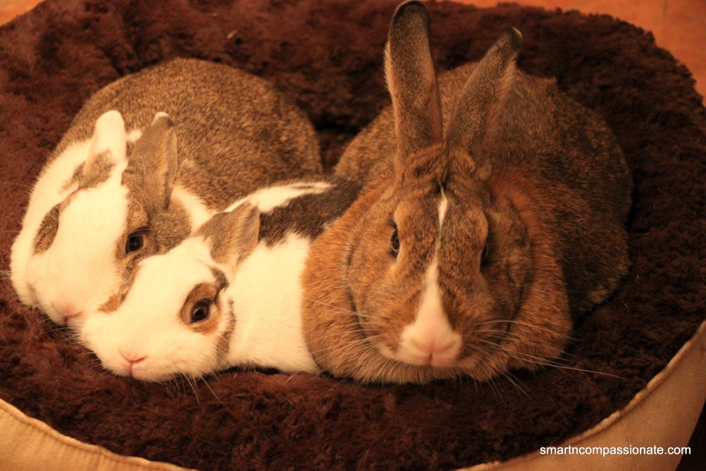 Left to right: Suzy Bunnita, Skippy Cottontail & Henry Blueeyes