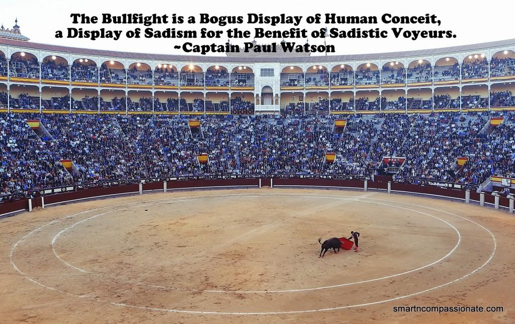 bullfight-406865_1920-001
